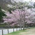 5/6 パスカル清見の桜