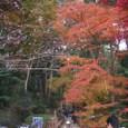 11/25 寒桜と紅葉
