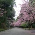 4/5 近江神宮参道