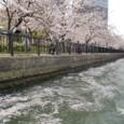 4/6 桜の波