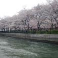 4/6 せりだす桜