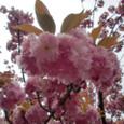 4/19 関山