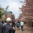 4/19 造幣博物館と桜