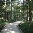 9/30 上高地の木製ハイキングコース