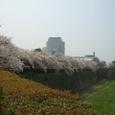 4/8 桜とNHK大阪放送局