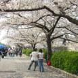 4/8 お堀沿いの桜