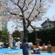 4/7 観桜会